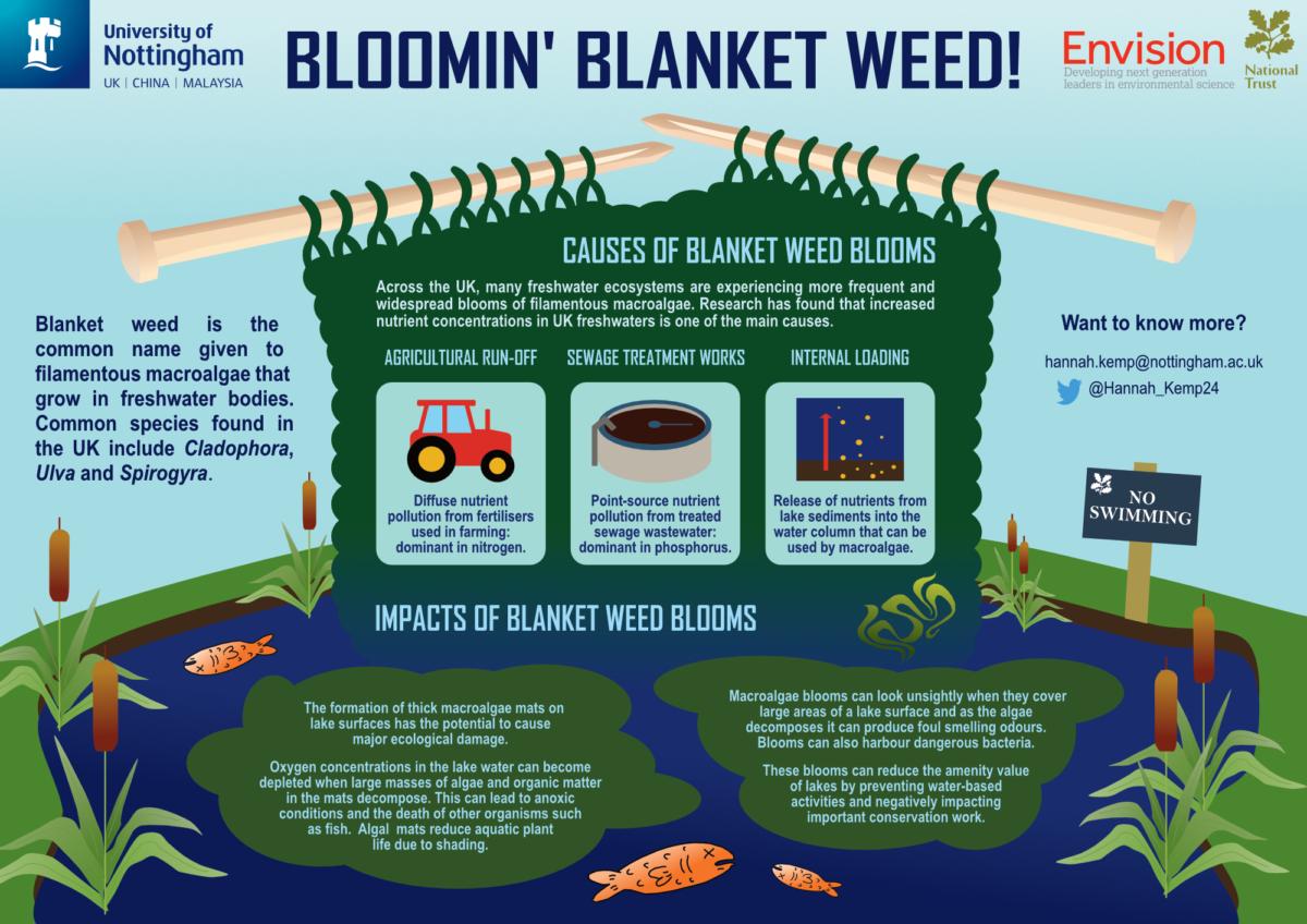 Hannah Kemp / Envision / Bloomin' blanket weed