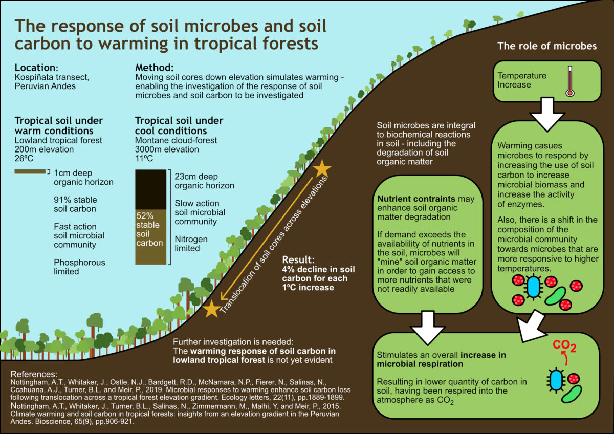 Sam Walrond / Envision / The response of soil microbes and soil carbon to warming in tropical forests